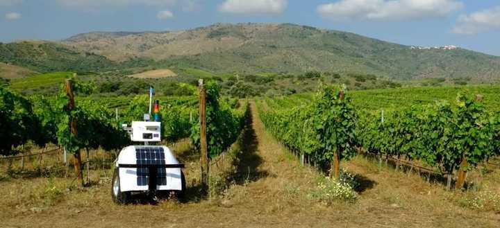 Así funciona el robot que monitorea a los viñedos