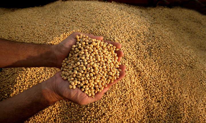 El mercado de granos, en un escenario de dólar más estable