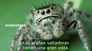 Cómo hacerle un examen ocular a una araña