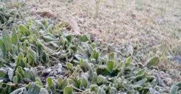 Martes de heladas fuertes