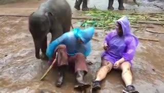 El recibimiento de un elefante bebé a una turista.