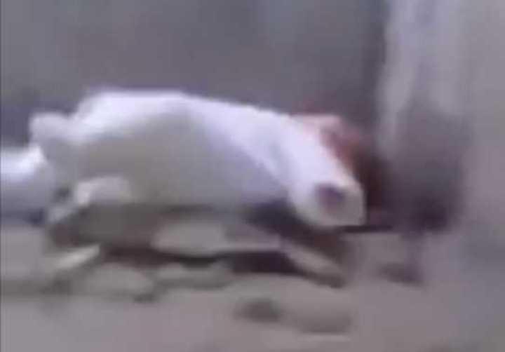 Rescatan a una bebé que cayó dentro de una alcantarilla en Tucumán