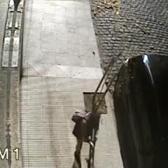 Colegiales: un pitbull mató a un caniche y la dueña acudió a la Justicia Penal