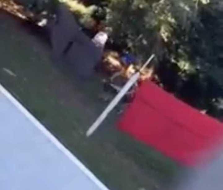 Filman a dos mujeres que maltratan a perros con palos