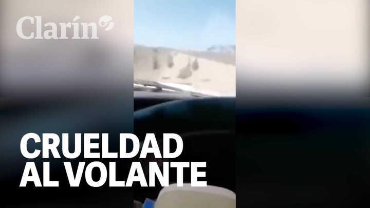 Crueldad al volante: se filmó cuando atropellaba animales por diversión y lo detuvieron