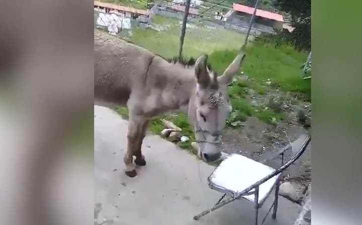 Detienen a dos bomberos en Venezuela por comprar a Maduro con un burro
