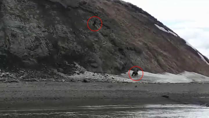 Un pescador se ahogó mientras intentaba escapar de un oso en Rusia