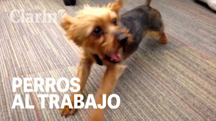 5 beneficios de llevar un perro a la oficina