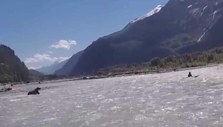 """El susto de su vida para un kayakista: un oso se tiró al río para """"cazarlo"""""""