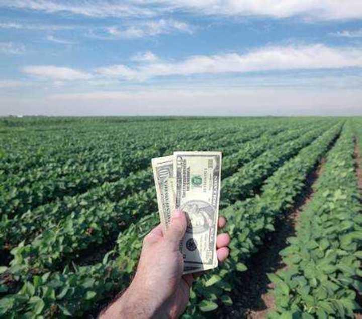 Inestabilidad del dolar, incertidumbre de los productores