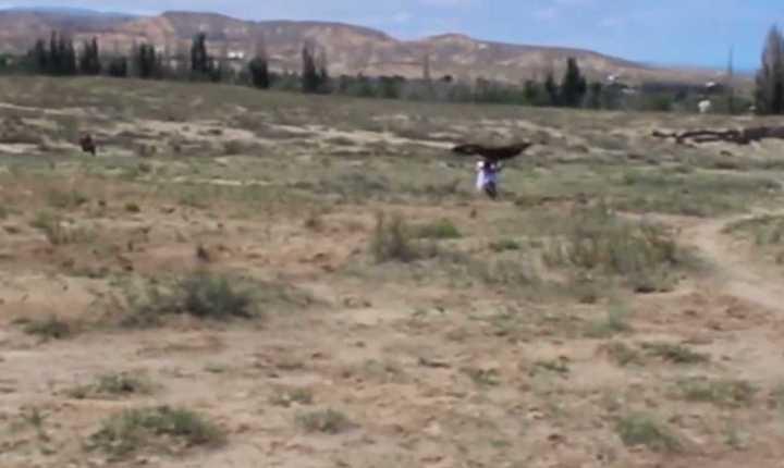 Increíble salvada: Un águila atacó a una nena de 8 años que confundió con una presa