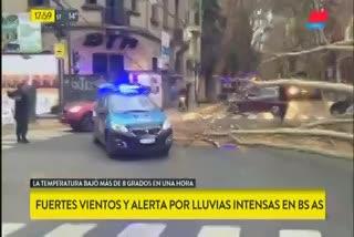 Cayó un árbol en Palermo