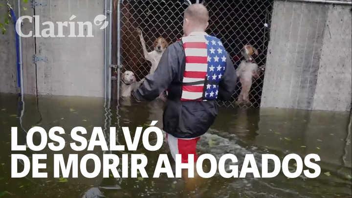 Huracán Florence: La emoción de seis perros a los que salvaron de morir ahogados