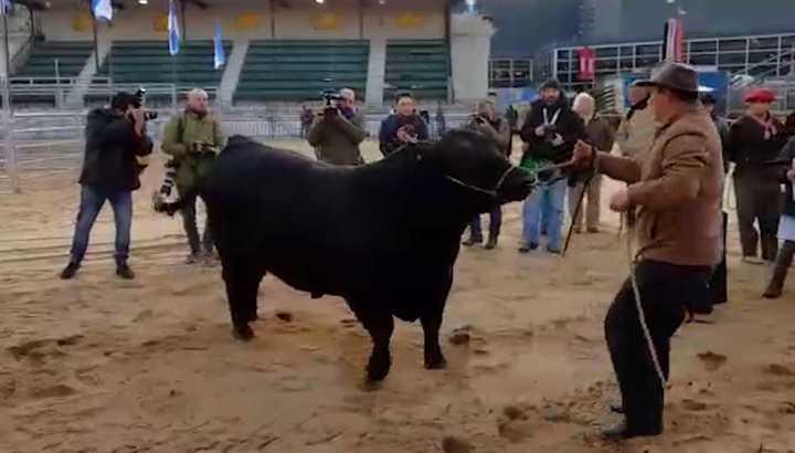Mbappé, el primer toro de La Rural