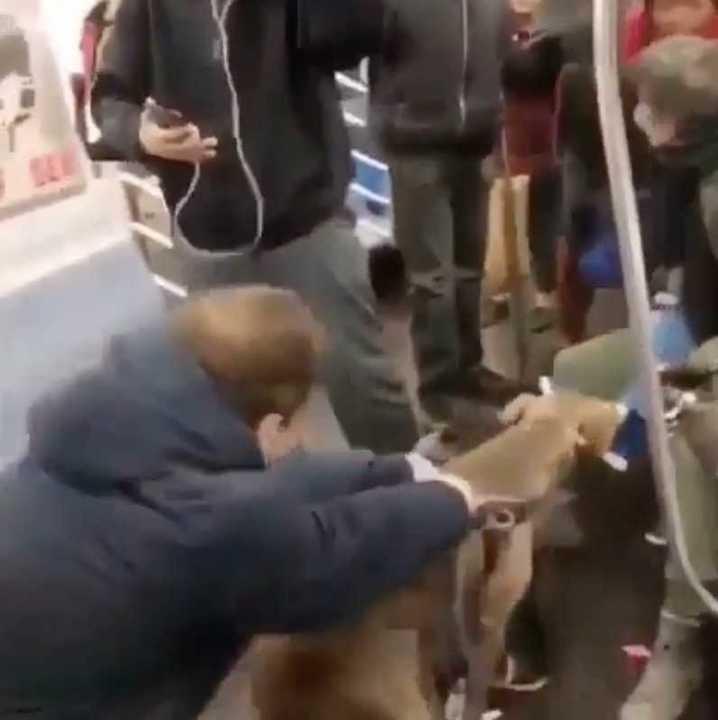 Perro ataca a una pasajera del Metro de NYC