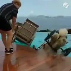 Video: el perro en silla de ruedas al que su parálisis no le impide tirarse a la pileta
