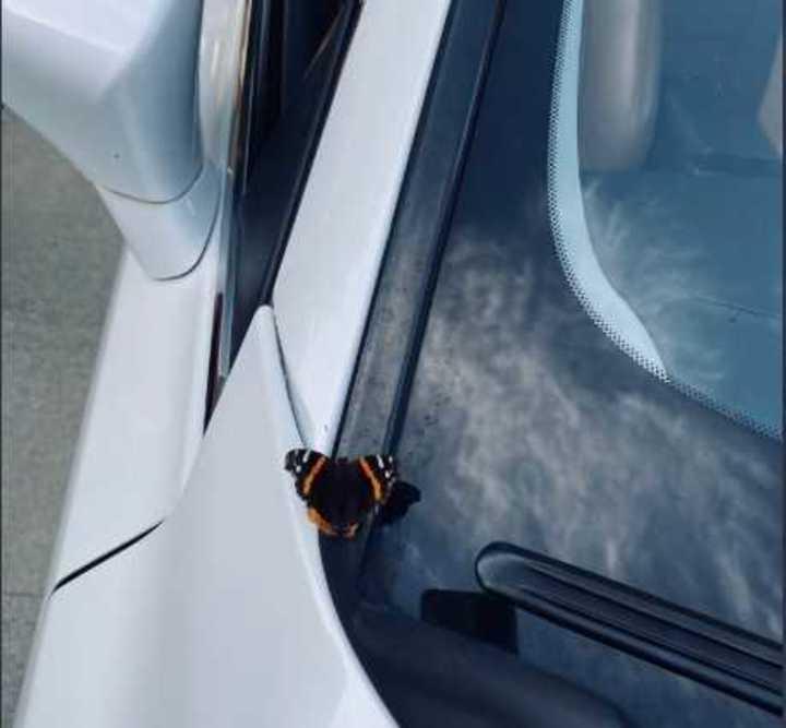 """""""Cuando de verdad lo supe"""" - Video: así fue el momento de la aparición de la mariposa"""
