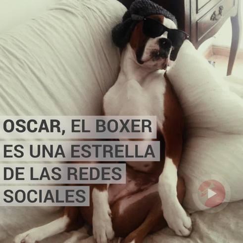 Oscar, el bóxer