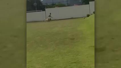 Neymar jugando con sus perros