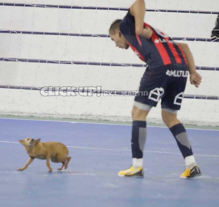 Menseguez y el perro picarón