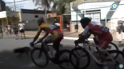 Un perro se cruzó sobre la pista de la Vuelta a San Juan y causó un accidente