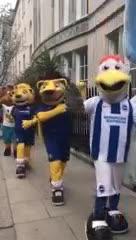 Desfile de mascotas en Inglaterra
