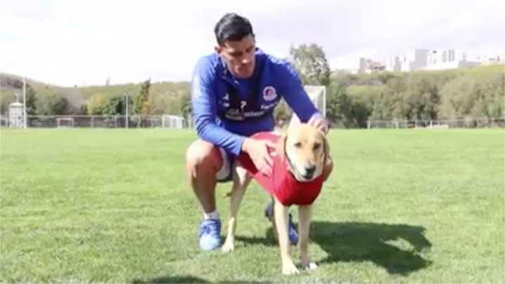 Tunita, el perro de Atlético de San Luis